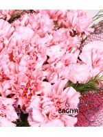 20 PINK CARNATIONS BUNCH